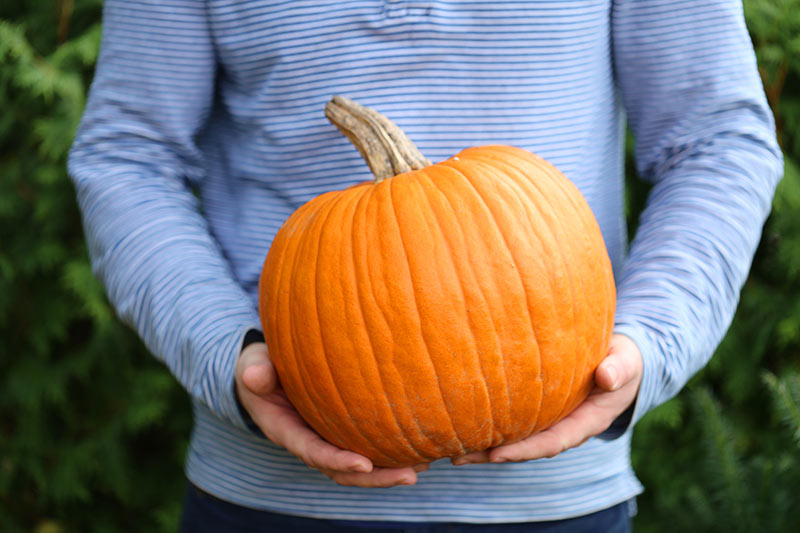 Person holding pumpkin, which can be used for your workout.