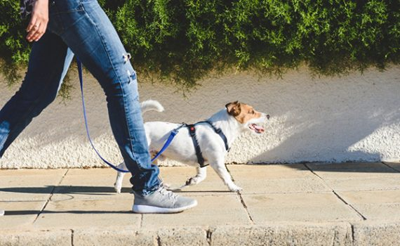 Person walking dog; is there a health benefit to walking 10,000 steps per day?