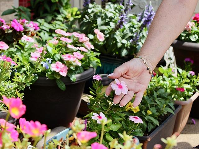 Barbara touching pink flowers in her garden