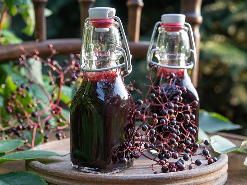 Glass bottles with elderberry juice, one of many well-known folk remedies, pictured alongside raw elderberries