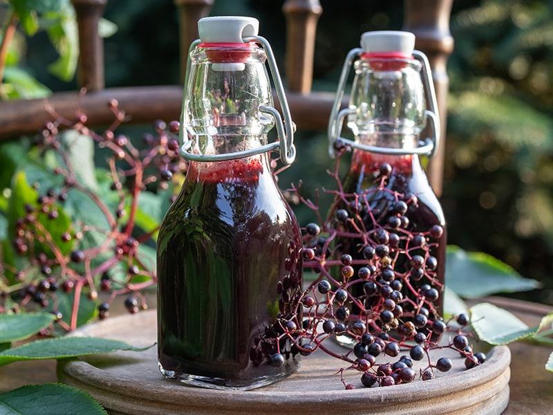 Glass bottles with elderberry juice, one of many well-known folk remedies, pictured alongside raw elderberries