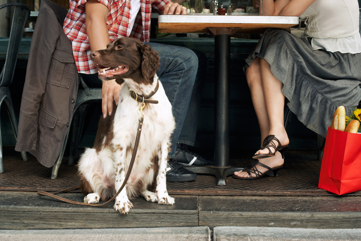 A brown and cream dog leashed and sitting next to an outdoor dining table and a couple of people.